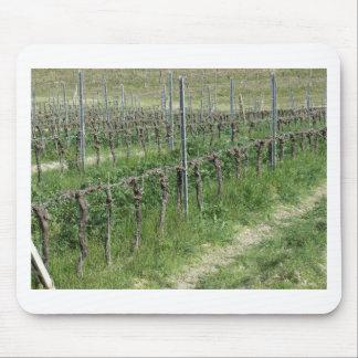 Tapis De Souris Champ nu de vignoble en hiver. La Toscane, Italie