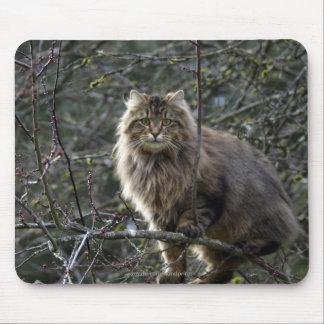 Tapis De Souris Chat tigré à cheveux longs Mousepad