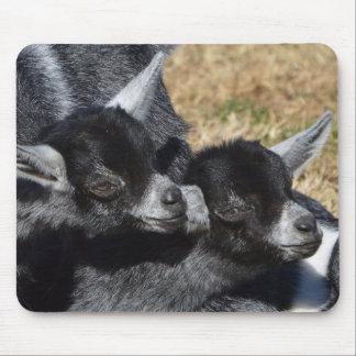 Tapis De Souris Chèvres de bébé un jour ensoleillé