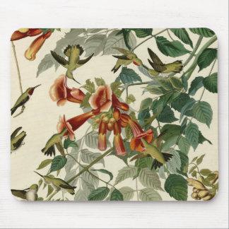 Tapis De Souris Colibris Throated rouges d'Audubon