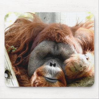 Tapis De Souris Collection animale - orang-outan rouge