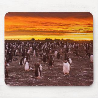 Tapis De Souris Colonie de pingouin au coucher du soleil, les