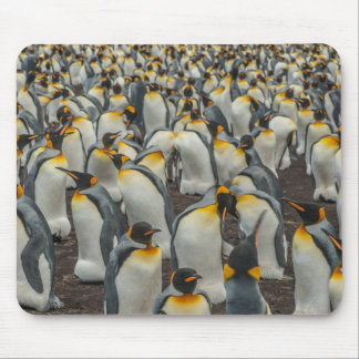 Tapis De Souris Colonie de pingouin de roi, Malouines