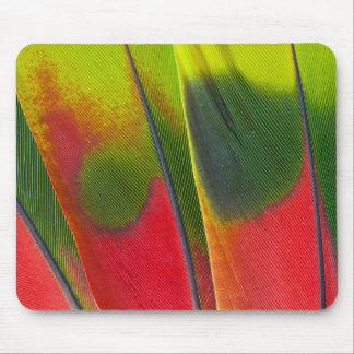 Tapis De Souris Conception de plume de perroquet d'Amazone