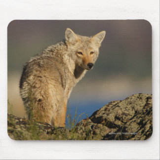 Tapis De Souris Coyote