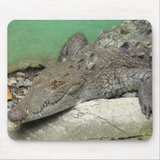 tapis de souris crocodile