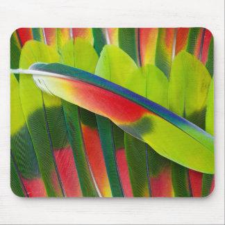 Tapis De Souris D'Amazone de perroquet de plume toujours la vie