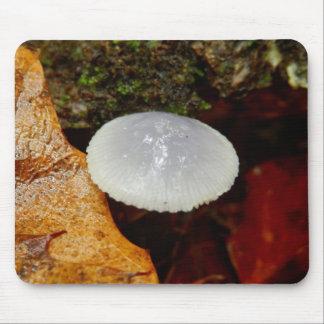 Tapis de souris de champignon de stylobates de