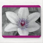 Tapis de souris de fleur de clématite pourpre
