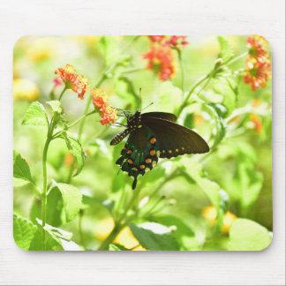 Tapis de souris de papillon