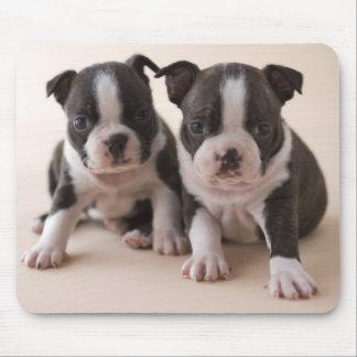 Tapis De Souris Deux chiots de Boston Terrier