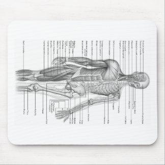 Tapis De Souris Diagramme humain d'anatomie