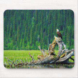 Tapis De Souris Eagle chauve été perché sur la branche