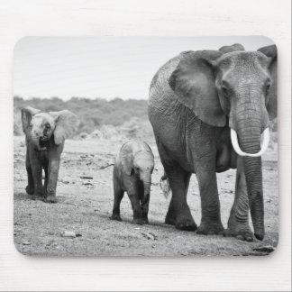 Tapis De Souris Éléphant africain et veaux | Kenya, Afrique