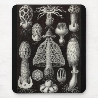 Tapis De Souris Ernst Haeckel - champignons de Basimycetes