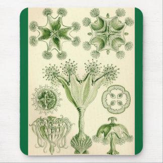 Tapis De Souris Ernst Haeckel - méduses de Stauromedusae