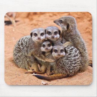 Tapis De Souris Famille de Meerkat