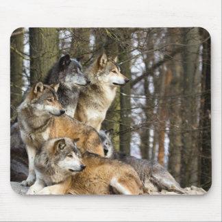 Tapis De Souris Famille des loups