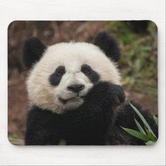 Tapis De Souris Fermez-vous de la consommation de panda