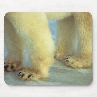 Tapis De Souris Fermez-vous des pieds d'ours blanc