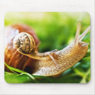 Tapis De Souris Fermez-vous du bébé escargot sur l'escargot adulte