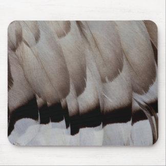 Tapis De Souris Fin grise de conception de plume
