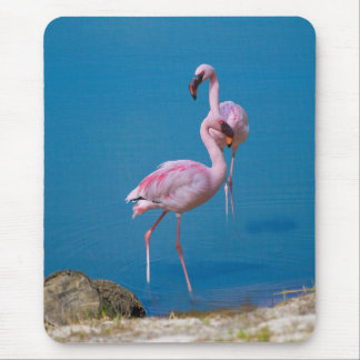 Tapis De Souris Flamants roses au lac