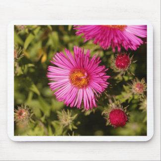 Tapis De Souris Fleur d'un aster de Nouvelle Angleterre