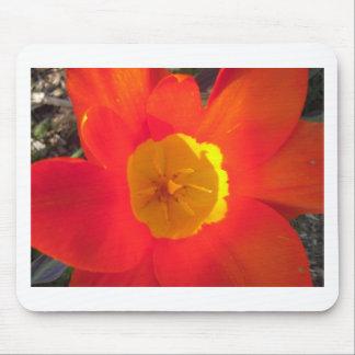 Tapis De Souris Fleur ouverte de tulipe de rouge et de jaune