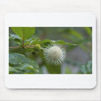 Tapis De Souris Fleur sauvage blanc de Buttonbush