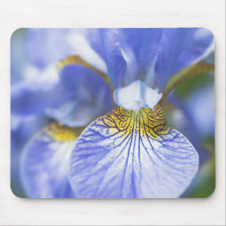 Tapis De Souris Fleur sibérienne d'iris
