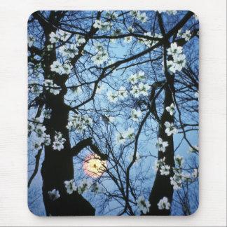 Tapis De Souris Fleurs de cornouiller avec le coucher du soleil