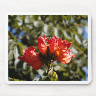 Tapis De Souris Fleurs d'un tuliptree africain