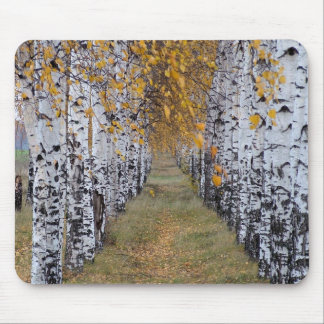 Tapis De Souris Forêt de bouleau de la Finlande