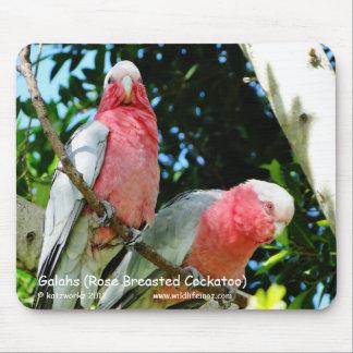 Tapis De Souris Galahs (cacatoès rose de Breasted)