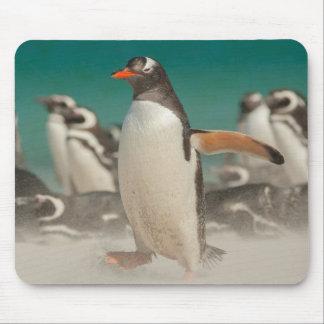 Tapis De Souris Groupe de pingouin sur la plage, Malouines