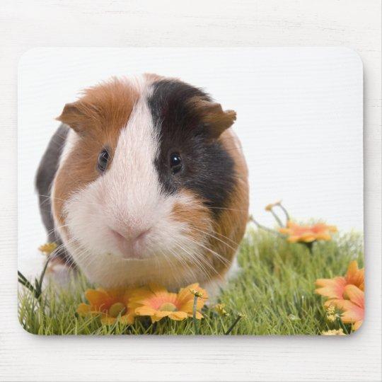 Tapis De Souris guinea pigs on a lawn