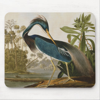 Tapis De Souris Héron de petit bleu d'Audubon