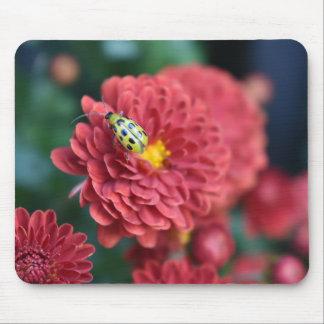 Tapis De Souris Insecte rouge d'insecte de scarabée de