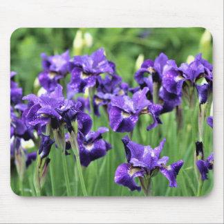 Tapis De Souris Iris sibérien bleu violet, le frère de César