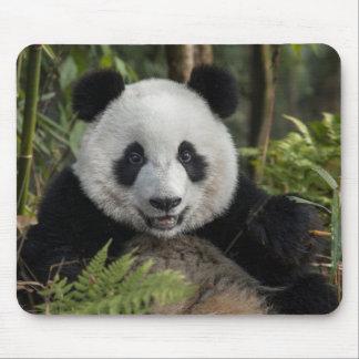 Tapis De Souris Jeune panda heureux, Chine