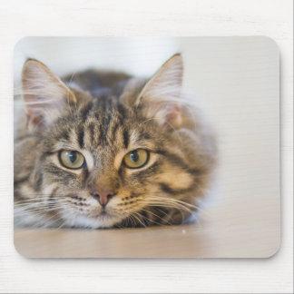 Tapis De Souris Joli Kitty vous regardant
