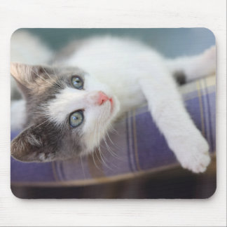 Tapis De Souris Kitty doux dans le lit de plaid