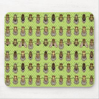 Tapis De Souris La génétique de mouche à fruit de drosophile -