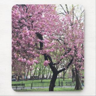 Tapis De Souris Le cerisier rose fleurit printemps New York City