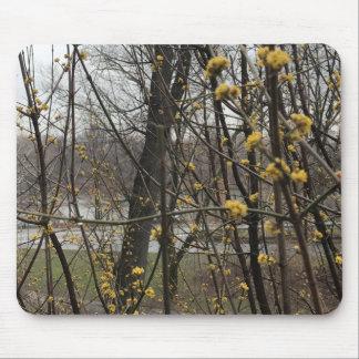 Tapis De Souris Le jaune se développe des arbres de Central Park