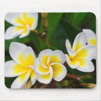 Tapis De Souris Le Plumeria fleurit le plan rapproché, Hawaï