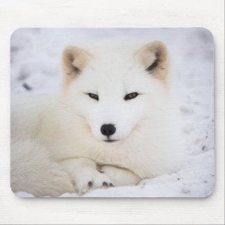 Tapis De Souris Le renard polaire blanc le plus mignon vous