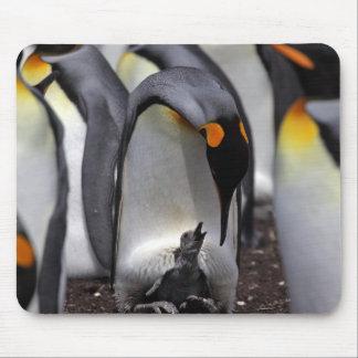 Tapis De Souris Le Roi pingouin avec le poussin