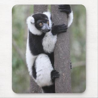 Tapis De Souris Lémur noir et blanc de Ruffed sur l'arbre